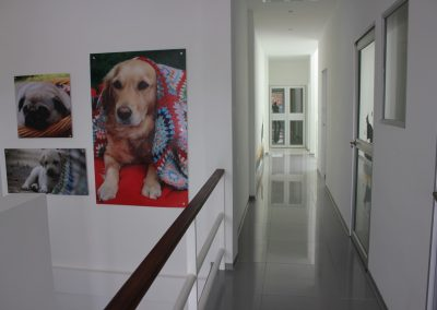 Instalaciones Animal Home