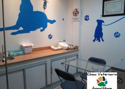 Consultorio Animal Home