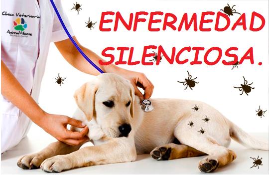 Enfermedad Silenciosa